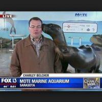Estas focas no pudieron evitar darle besos al reportero. Foto:Vía Youtube