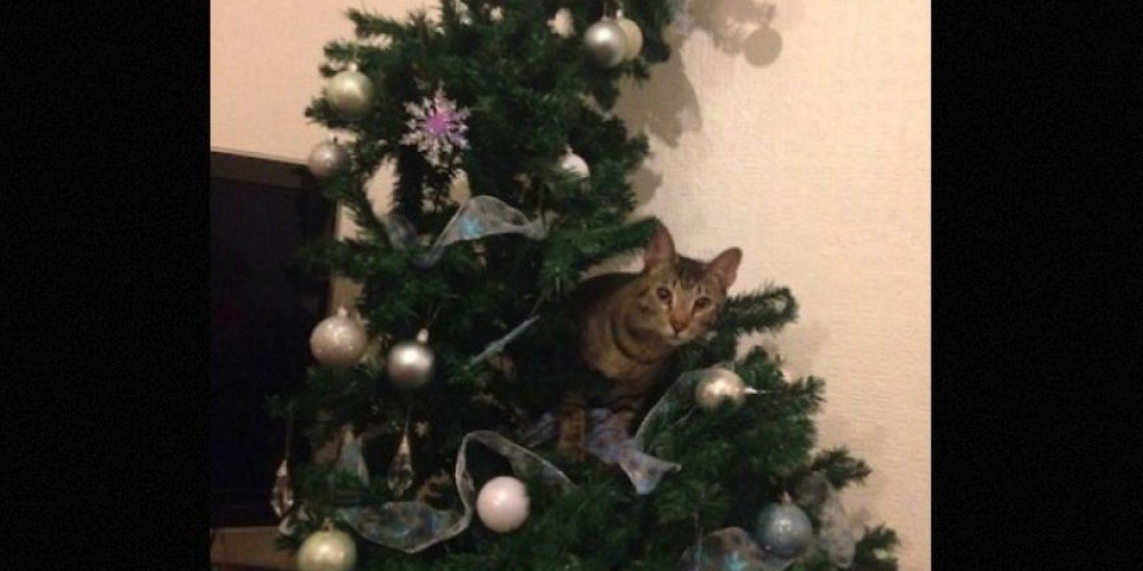 Hay algunos a los que no les gusta la Navidad Foto:Twitter – Archivo