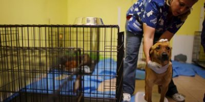 VIDEO: Cruel abandono a un perro causa conmoción en redes sociales
