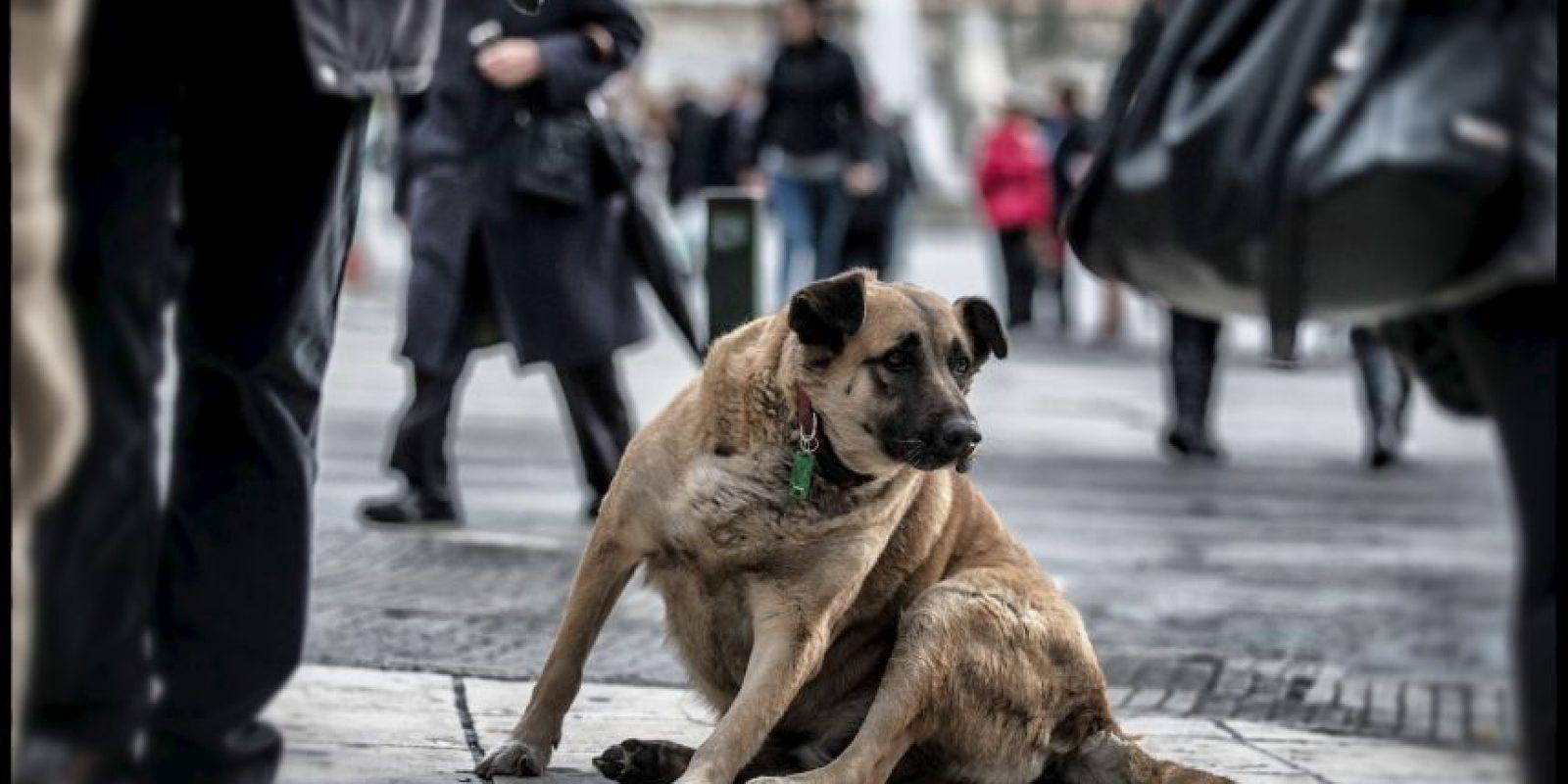 """""""Adoptar un perro o gato simplemente porque es lo que la gente """"hace"""" o porque los niños han estado lloriqueando por un cachorro generalmente termina en un gran error"""", dice la organización de protección de animales Foto:Getty Images"""