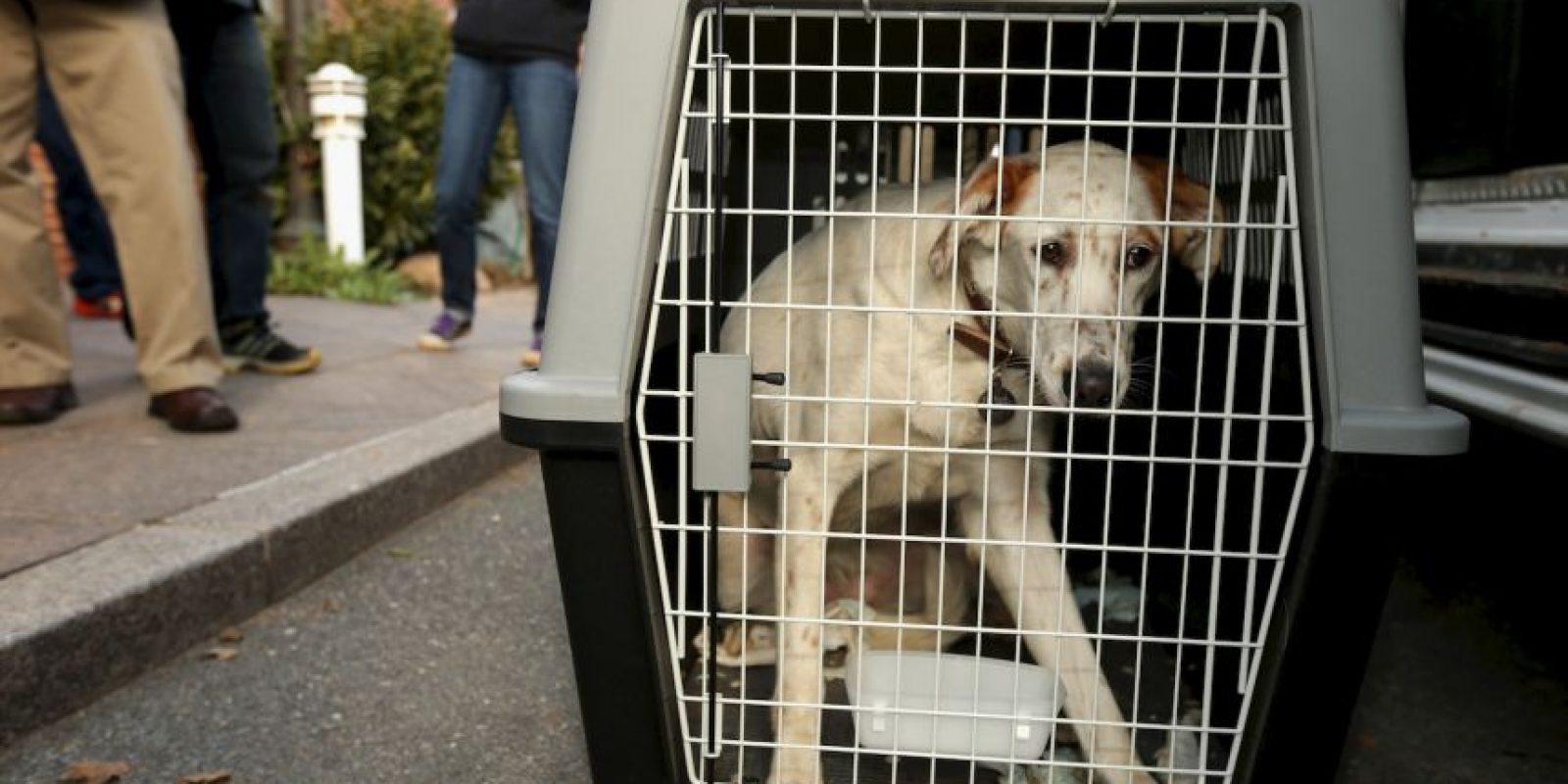 Aspectos a considerar antes de adoptar una mascota Foto:Getty Images
