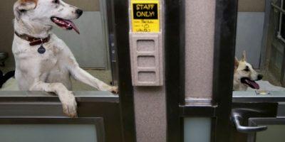 También recuerdan que no en todos los edificios está permitido tener mascotas y algunos tienen restricciones. Foto:Getty Images