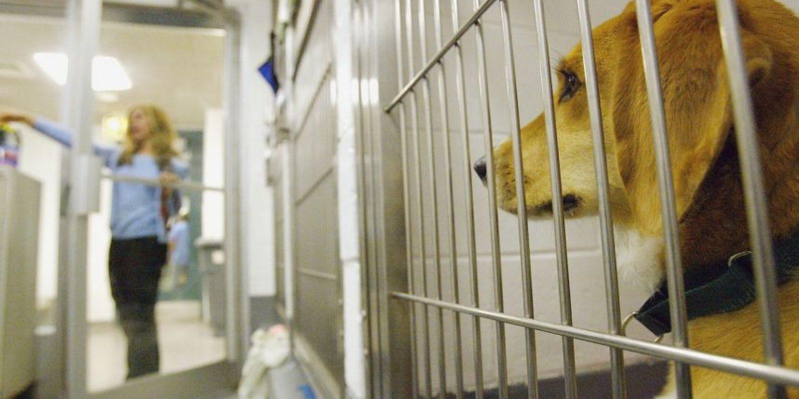 Su manutención puede tener costos muy elevados: cuidados veterinarios, accesorios, comida, etcétera. Foto:Getty Images