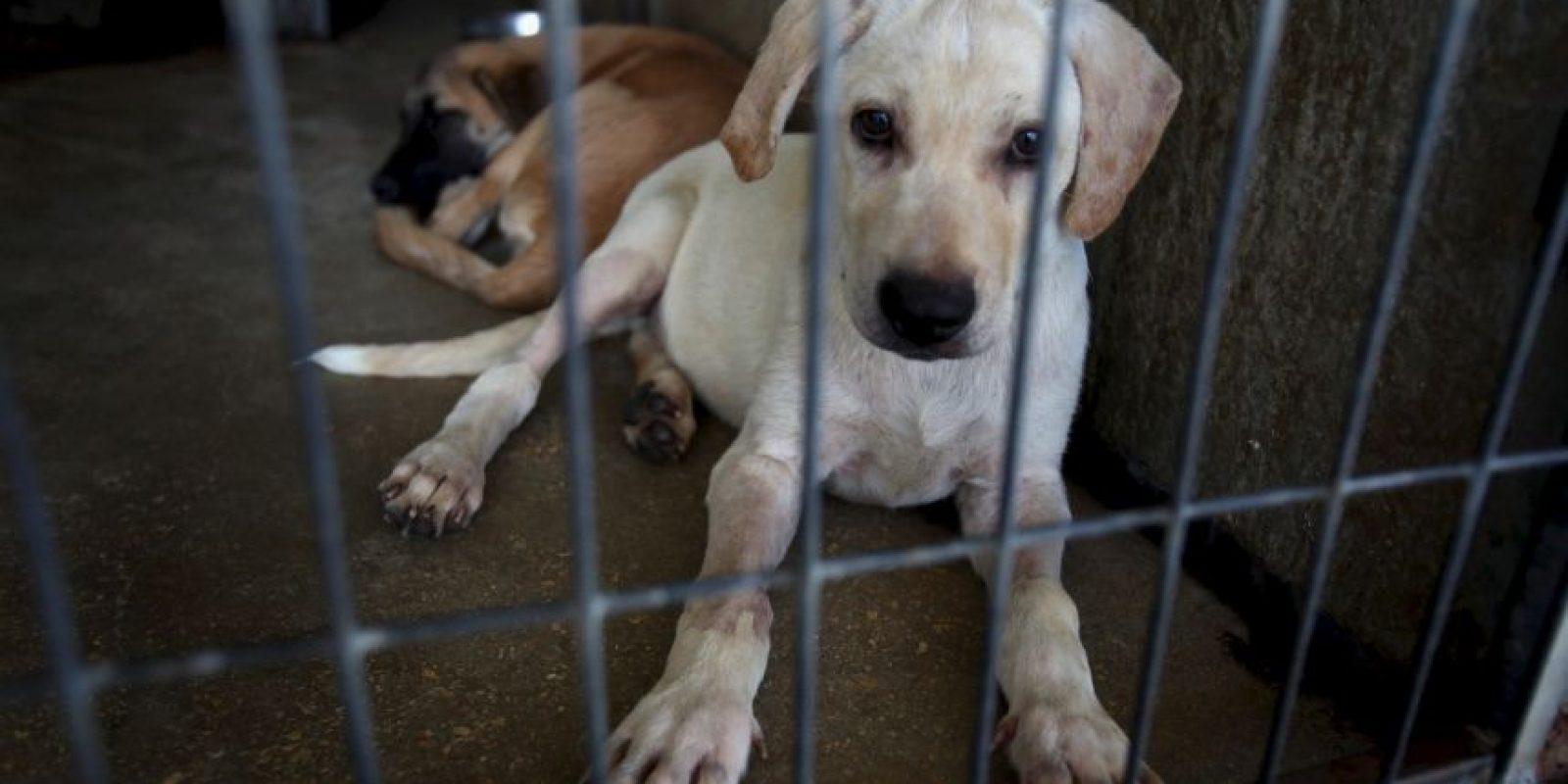 Las instituciones de defensa de animales sugieren tener en cuenta los problemas de salud provocados por pulgas, u otros organismos Foto:Getty Images
