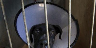 Las mascotas requieren comida, agua, ejercicio y compañía todos los días Foto:Getty Images
