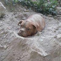 2. Hombre enterró vivo a su perro y este fue rescatado por un extraño. Foto:Vía Facebook/ Pedro Dinis