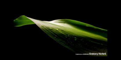 Samsung Galaxy Note 5 Foto:Samsung