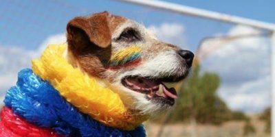 """Fotos: Las 17 imágenes más tiernas de Uggie, el perrito de """"The Artist"""""""