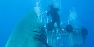 Descubran por qué este video de un tiburón blanco se hizo viral