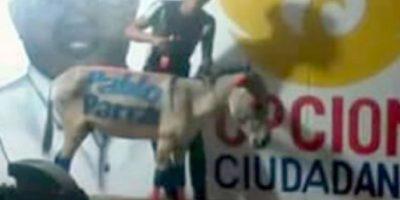 El candidato en cuestión rechazó el uso de los animales, pero se puede ver que es él. Foto:vía El Heraldo