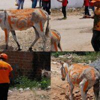Las imágenes circularon en redes y han enfurecido a varios internautas que han condenado el maltrato animal Foto:vía Twitter