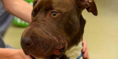 esta pobre perra le amarraron el hocico. Foto:vía Asociación Animal de Charleston