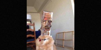 """Son sus dueños quienes muestran las consecuencias de las """"travesuras"""" de sus mascotas Foto:Vía facebook.com/animalsinoddplaces"""
