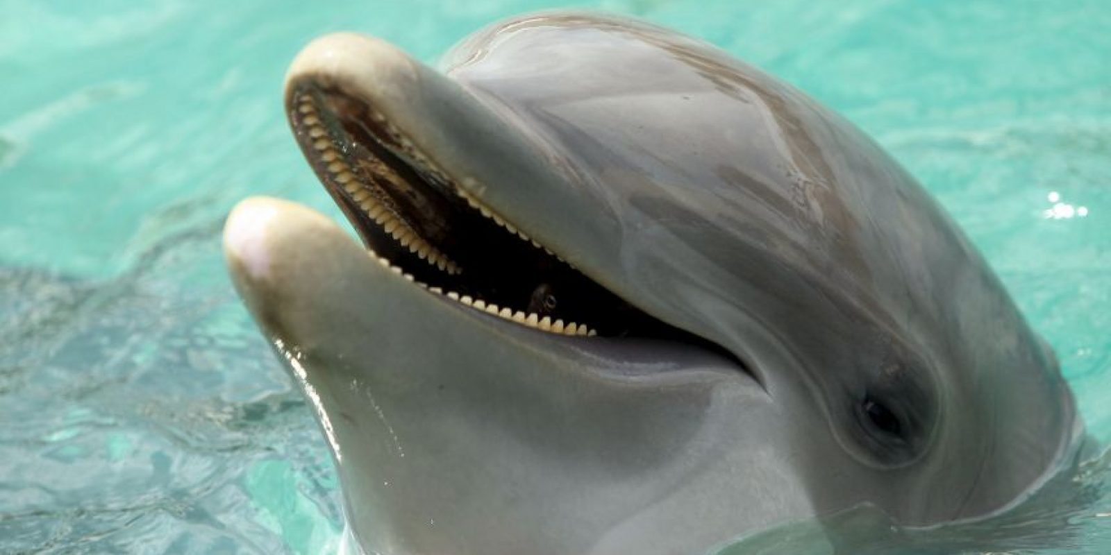 2. Delfines Foto: Getty Images
