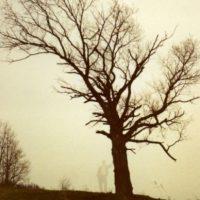 Foto:Imgur