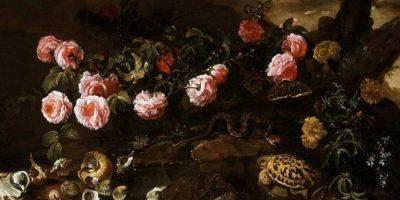 """Conchas y tortugas"" Paolo Porpora Foto:Wikimedia"