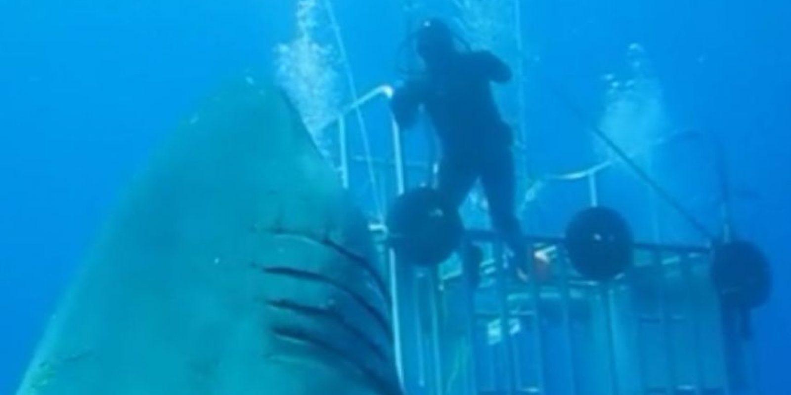"""El experto en tiburones de """"Discovery Channel"""", Mauricio Hoyos Padilla, subió el pasado 10 de agosto una inmersión realizada en 2013 en la isla de Guadalupe, en México, donde encontró lo que llamó """"el mayor tiburón blanco jamás grabado"""". Foto:Vía Facebook.com/amaukua"""