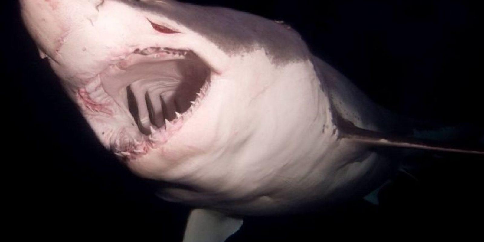 Aquí otro enorme tiburón captao por Mauricio Hoyos Foto:Vía Facebook.com/amaukua