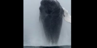 Video: Ballena sale del agua y