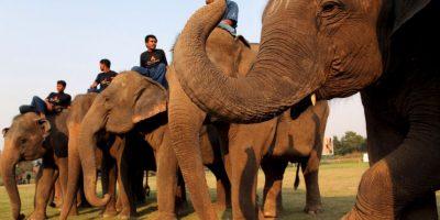 """Un elefantes causó la muerte a su guía y """"secuestró"""" a tres turistas"""