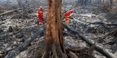 Incendio forestal en Indonesia. Foto:AFP