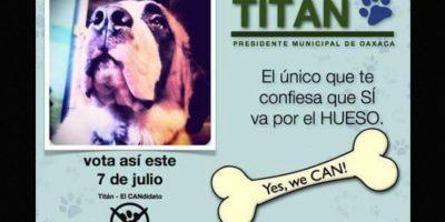 """Titán"", otro animal que se postuló como candidato Foto:Facebook.com"