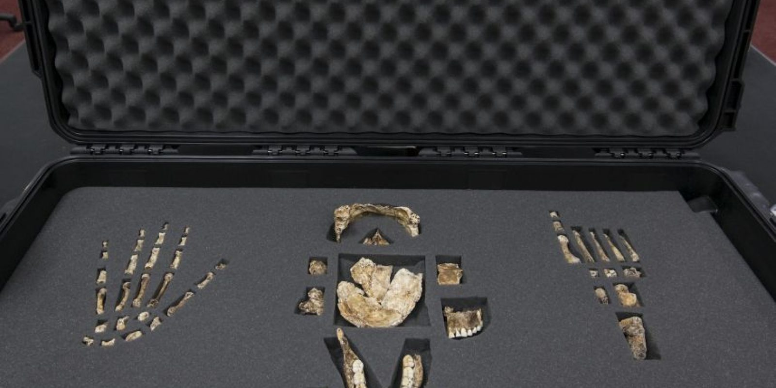 Sus manos ya contaban con un pulgar para fabricar herramientas de piedra y sus pies eran parecidos a los de los humanos, solo que más planos Foto:AFP
