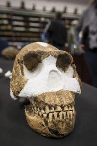 Esta especie ya tenía consciencia sobre la muerte y habrían realizado los primeros funerales, algo que no se había descubierto en ningún otro de los ancestros. Foto:AFP