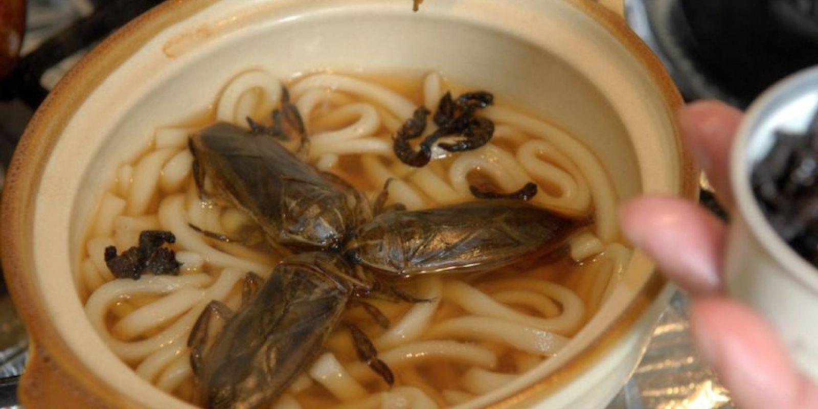 Muchos portan bacterias. Las moscas son portadoras de Salmonella. Foto:vía tommyncol.blogspot.