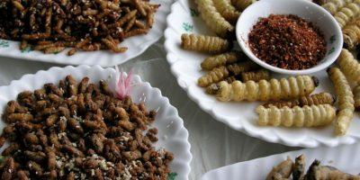 Video: 7 tutoriales para cocinar insectos y gusanos que los horrorizarán