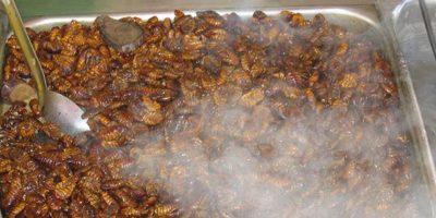 Ni se ha regulado su tratamiento. Foto:vía earthexcursion.com