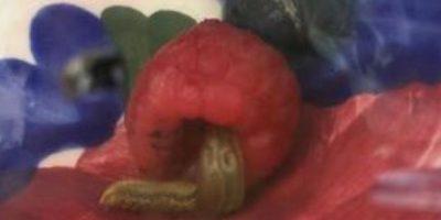 Encontró un molusco. Foto:vía Imgur
