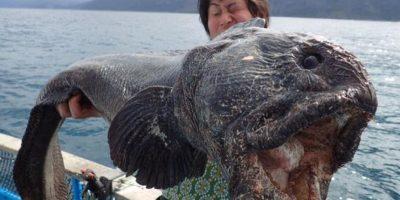 """¿Un pez """"mutante"""" de Fukushima? Conozca la historia detrás de esta foto"""
