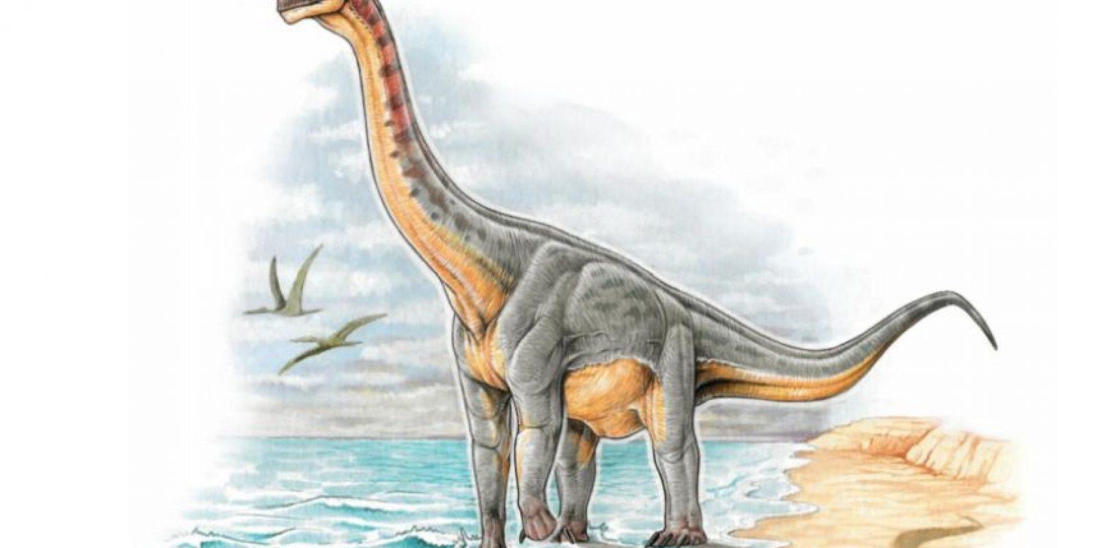 Sin embargo, el Padillasaurus leivaensi es el primer dinosaurio terrestre hallado. Foto:Vía facebook.com/CentrodeInvestigacionesPaleontológicas