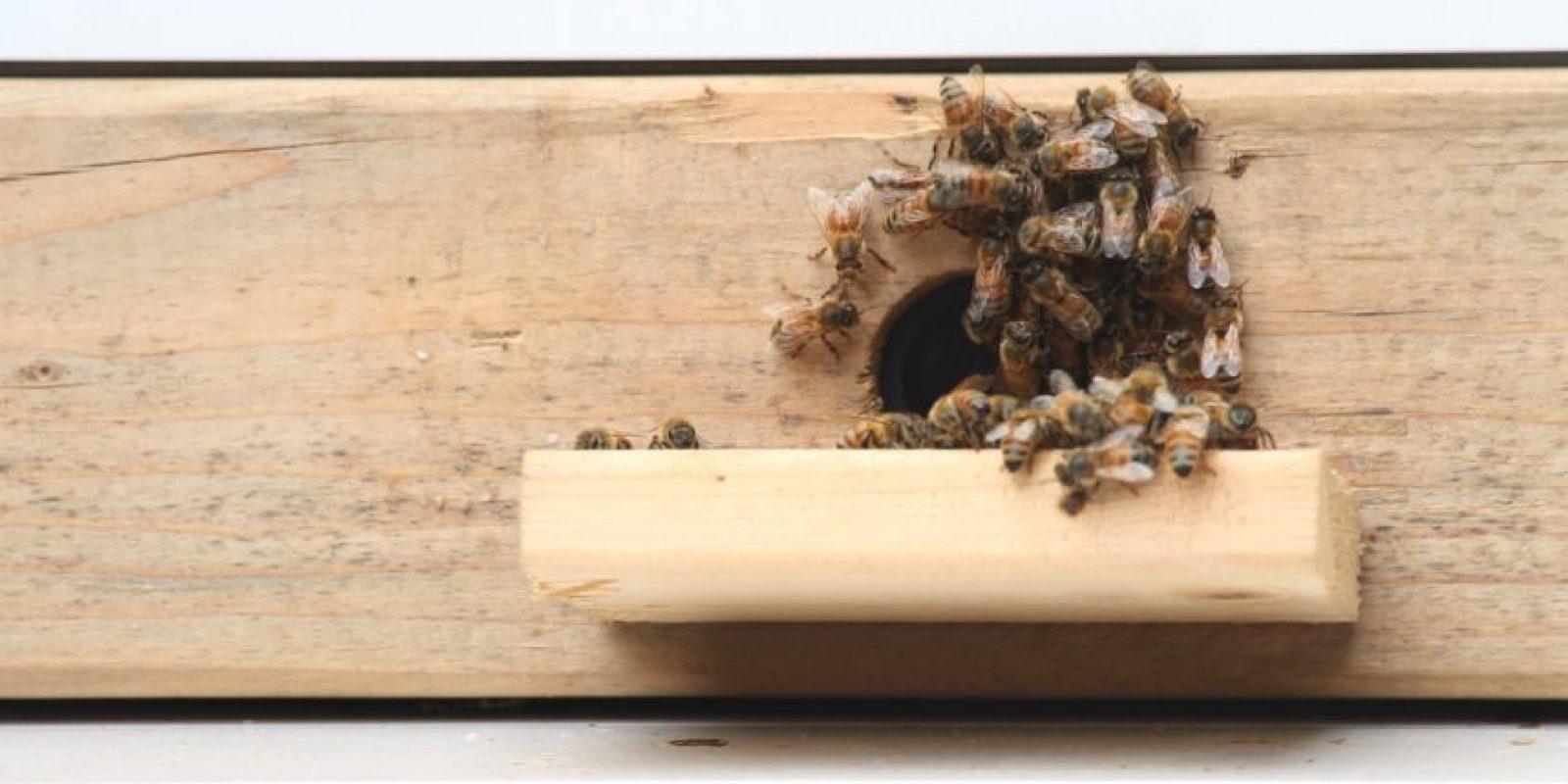 Foto:BEEcosystem