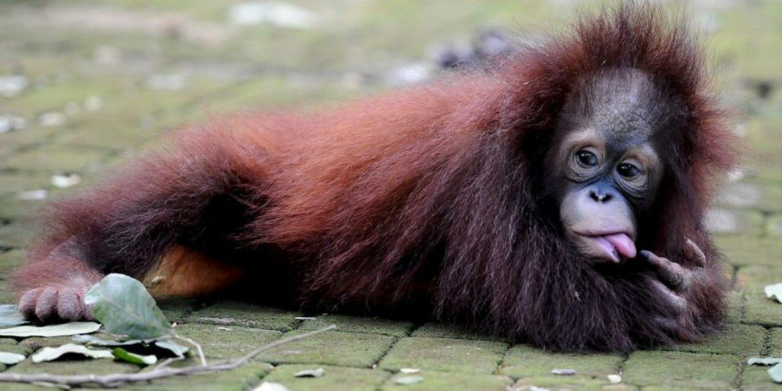 """Al ser cuestionado sobre cuál era su insecto favorito el argentino respondió """"el mono"""". ¿Se habrá confundido? Después argumentó su respuesta: """"Los monos siempre han sido mis favorito, son descarados"""". Foto:Getty Images"""