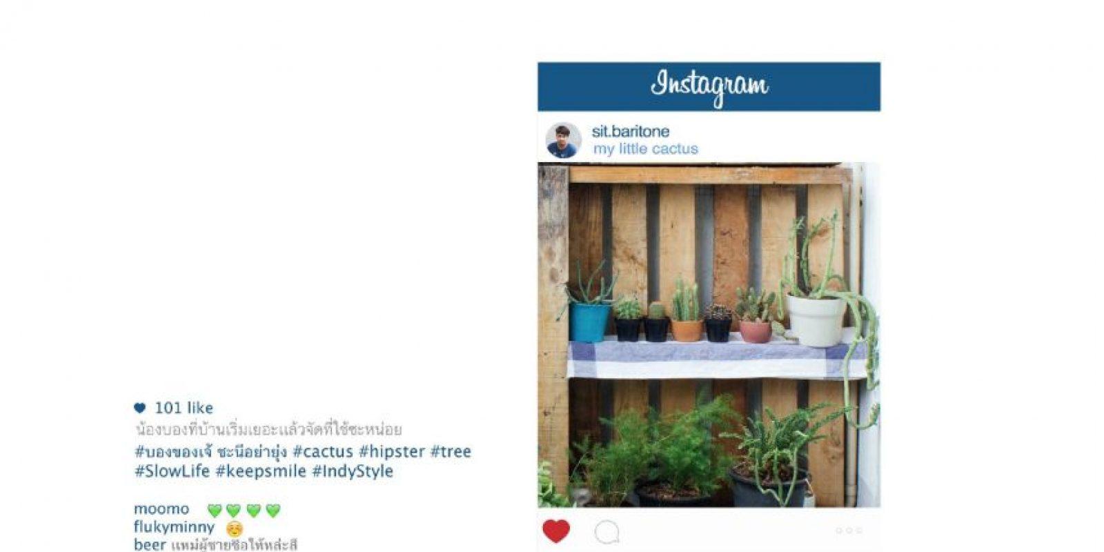 Plantas, para mostrar un delicado sentido estético. Foto:vía Facebook/Chompoo Baritone