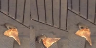 Video: Rata se lleva una porción de pizza en plena calle de Nueva York