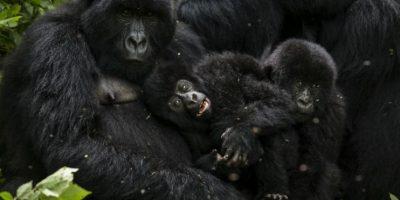 Virunga es considerado Patrimonio de la Humanidad. Foto:Getty Images