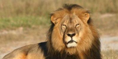 Video: Leona rescata a cuidador de león que quería atacarlo