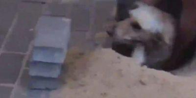 Video: Salvan a perrita embarazada atrapada bajo el piso