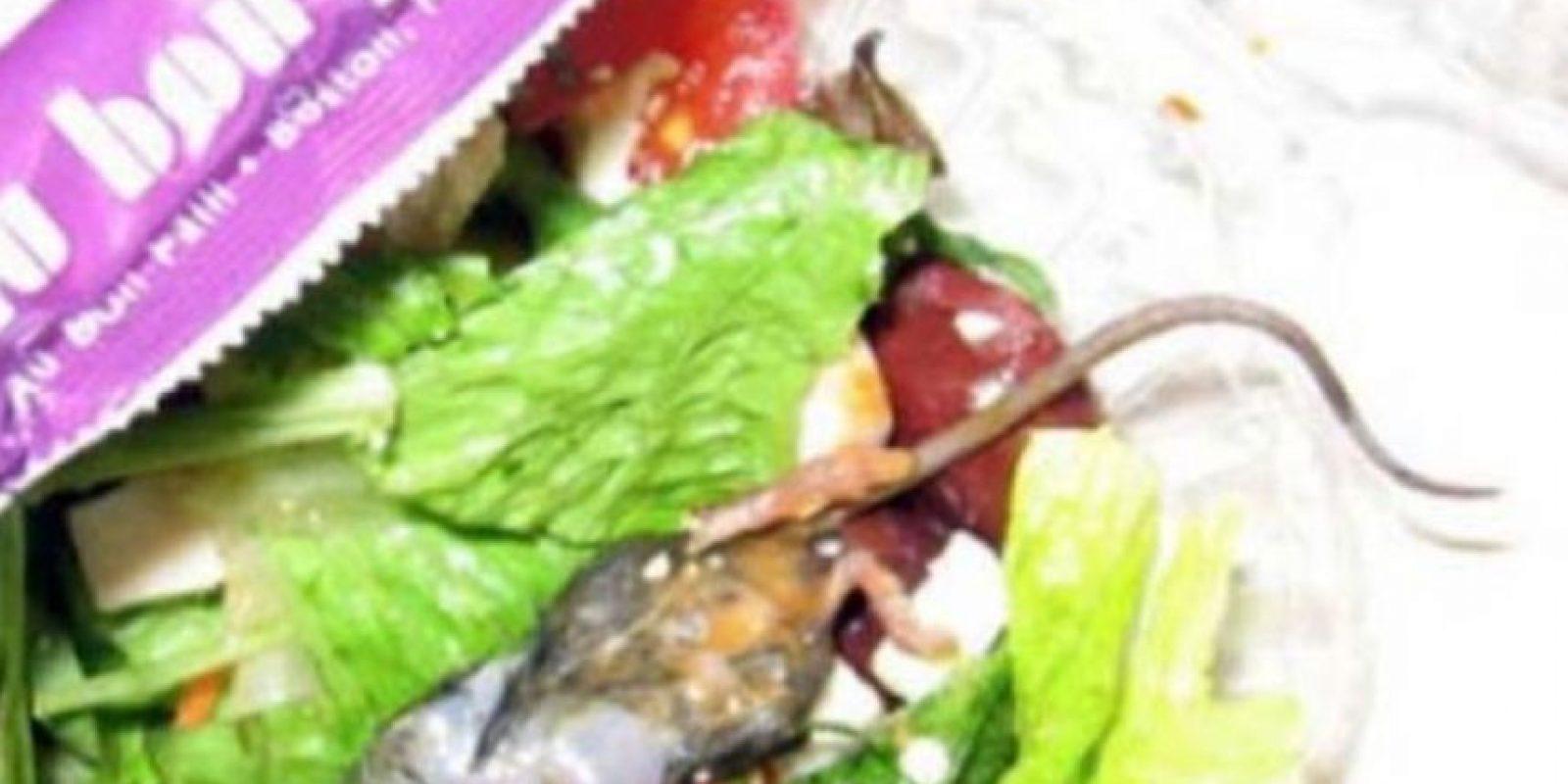 Rata gourmet. Foto:vía Imgur