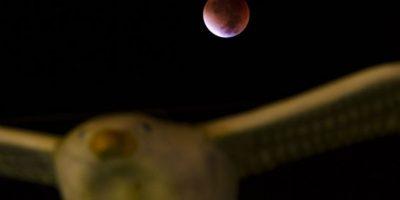 Y también se pintó de rojo. Foto:AFP