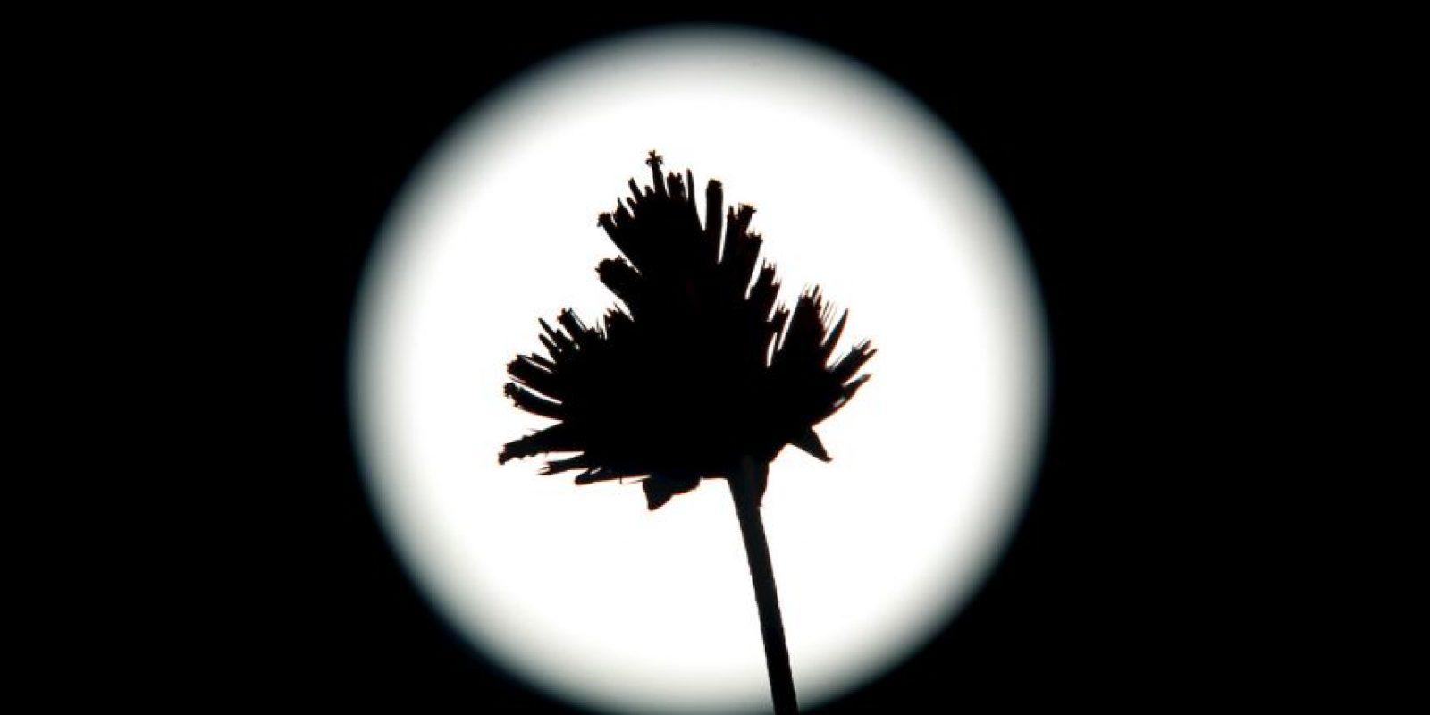 En Los Angeles, California las palmeras no evitaron que la Luna se luciera. Foto:AFP