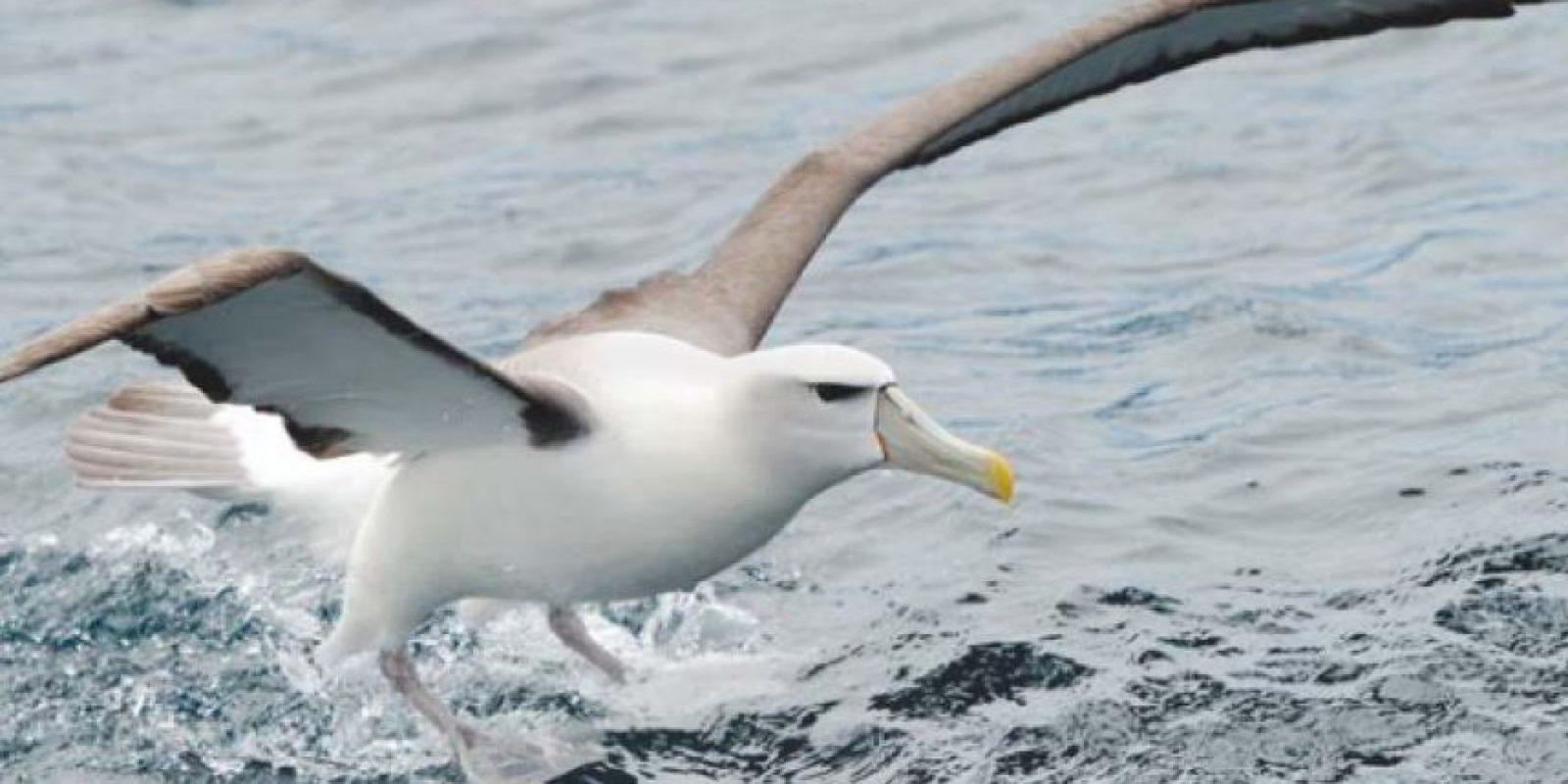 El lugar cuenta con 39 especies diferentes de aves. Foto:Vía http://mfe.govt.nz