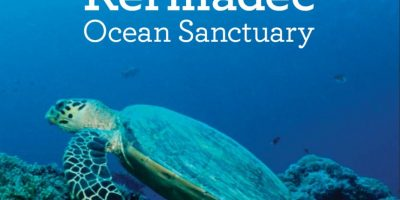 También hay más 250 especies de coral. Foto:Vía http://mfe.govt.nz