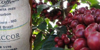 El café de la Hacienda Santa Inés en Brasil. El método que tienen para sembrar y recoger el grano es el tradicional. Vale 50 dólares la libra. Foto:vía Fazenda Santa Inés
