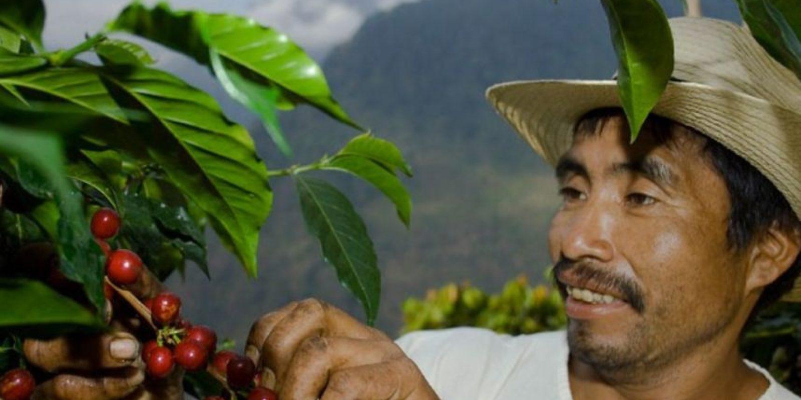 El café de El Injerto, en Guatemala, también tiene un sabor único. Cuesta 50 dólares la libra. Foto:vía Getty Images