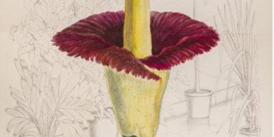 Esta flor es la peor pesadilla de todo aquel que tenga tripofobia