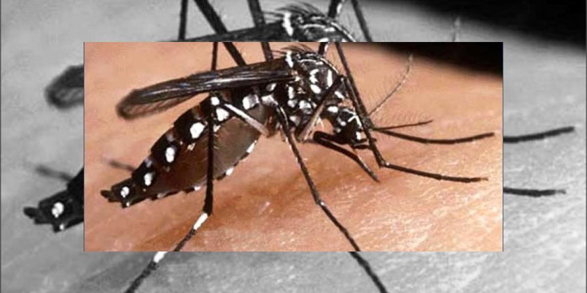 Suman 73 los fallecidos por dengue en lo que va de año en el país